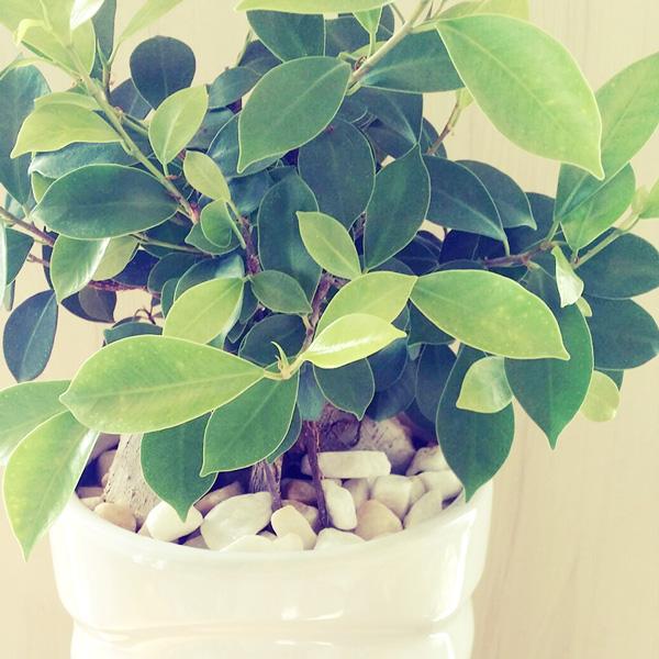店内 植物